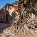 tree with history