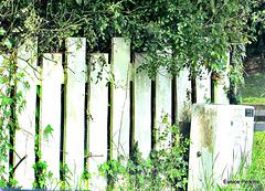 Fence On a Corner