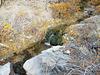McGill Creek