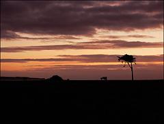 l'ile de GROIX à l'horizon au coucher du soleil