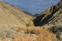 McGill Canyon