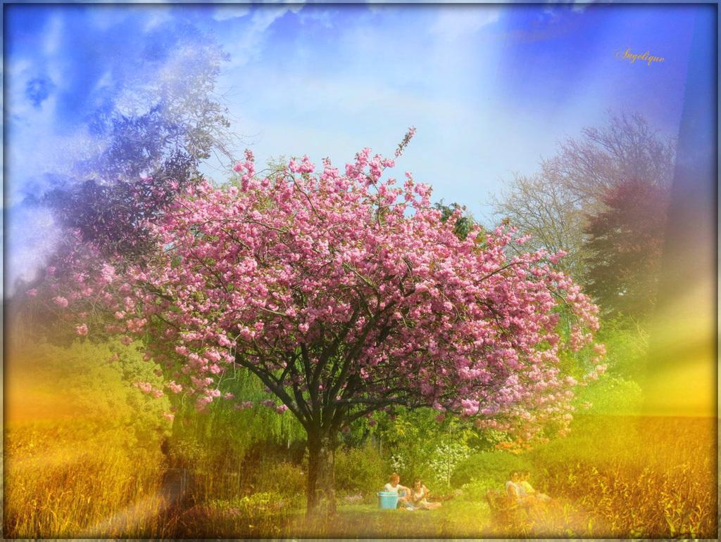 Un vrai Paradis .............Bon Dimanche à tous !