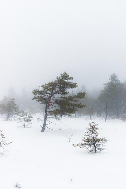 Nebel im Moor - 20150101