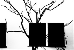 abstract tree picture