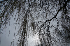 Trees Looking Up 1