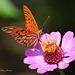 A good menu for butterflies.