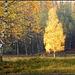 Hello Autumn 3 !