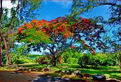 Buon Natale da Mauritius - (759)