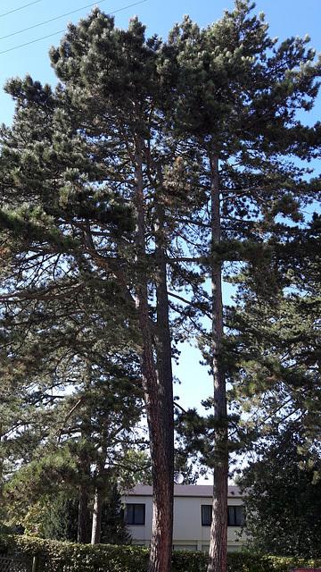 Some tree