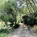 Path at Sandy Bay.