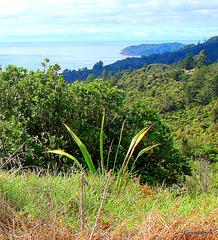 Just North of Tairua.
