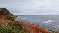 La côte sauvage / A costa selvagem