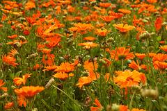 Garden of Orange