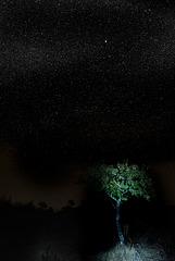 Penedos, Starry night