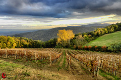 The vineyard  (on explore)