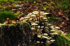 Pilzpyramide - Mushroom pyramid