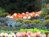 Pumpkins and More