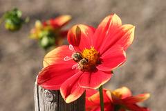 SSC: Flowers (SOOC)