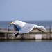 Gull photos, New Brighton (5)