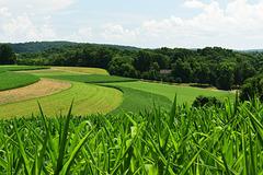 Summertime Farmland
