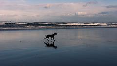 paseando por la arena mojada