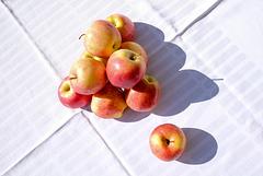 pomme tombée pas bien loin de l'arbre