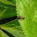 20200520 7540CPw [D~LIP] Insekt, Bad Salzuflen