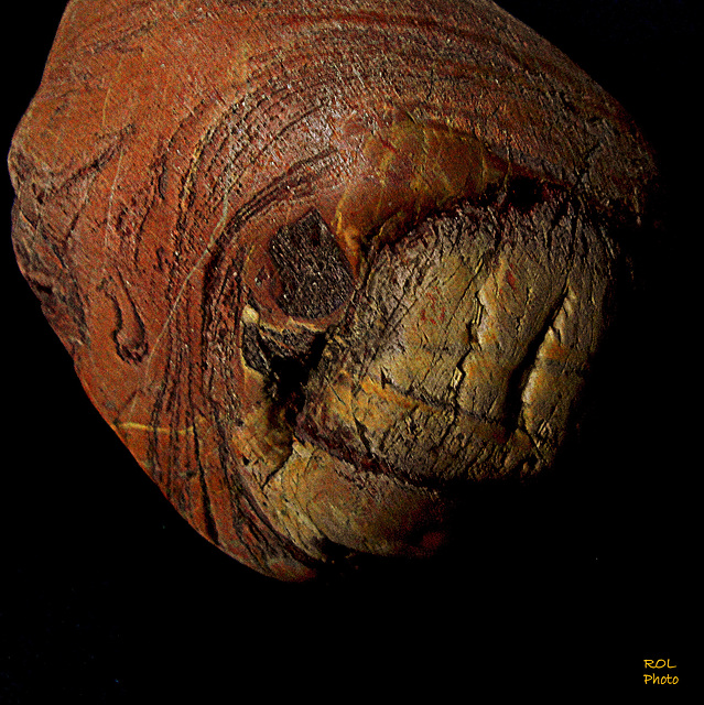 A human skull from prehistory (a Australopithèque 4.2 million years and 2 million years before our era.)