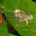 20200520 7542CPw [D~LIP] Insekt oder Samen?, Bad Salzuflen [Samen]
