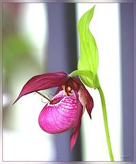 orchidee?