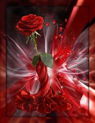Rose juponnée...