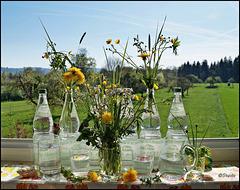 """Sagt """"Ja"""" zu Wasser aus Glasflaschen! Weil es gesünder ist, auch für die Natur! - Informationen siehe Beschreibung zum Bild."""