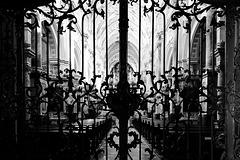 Blick durch das Gitter - View through the fence - HFF