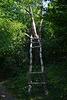 Лестница без ступеней в лесу на берегу Бакотского залива / Stairs without steps in the forest on the shore of the Bay of Bakota