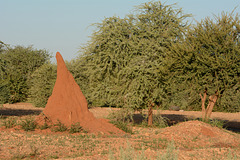 Namibia, Dwelling of Termites in the Game Reserve of Erindi
