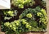 CCB - Jardim Vertical