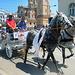 Parade of showy horses (PiP)