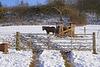 Ein Winter-Nachlese HFF - A winter gleaning HFF