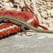 Aber gerne benütze ich den 'Roten Teppich'. Danke für diese Ehre... ©UdoSm