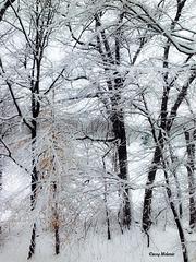 Winter wonderland in New York