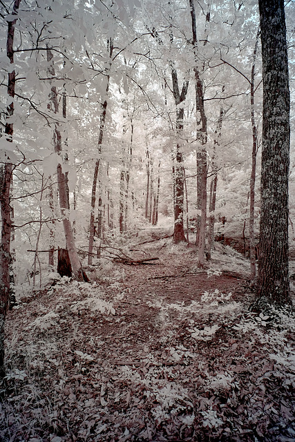 Into the woods with the new 14mm lens