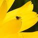 20200520 7546CPw [D~LIP] Rapskäfer - Insekt, Bad Salzuflen