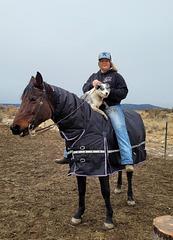Horse, dog, girl