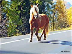 ... ein Pferd geht seinen Weg