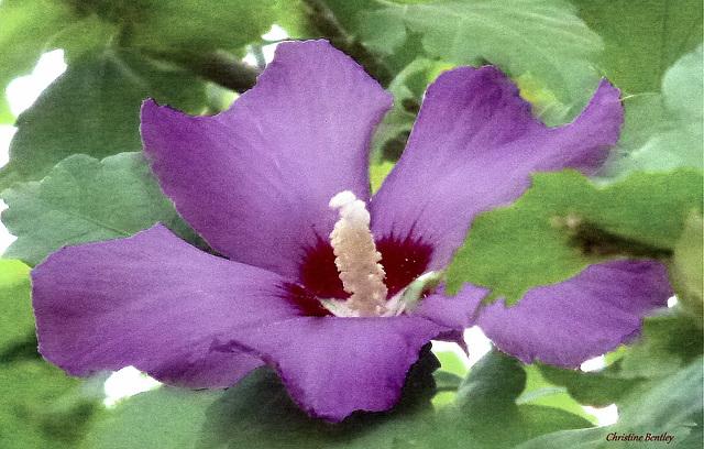 Purple Beauty