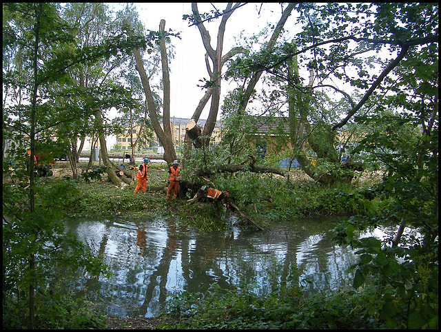 Network Rail tree felling
