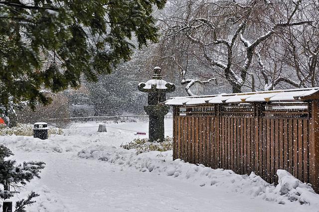 Under Snow – Brooklyn Botanic Garden, New York, New York