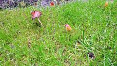 herfst in froggelstein