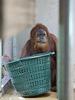 Wer will fleißige Waschfrauen sehn ... (Wilhelma)