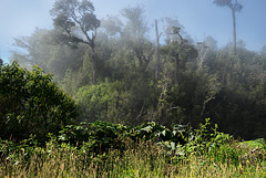 carretera_jungle